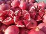Địa điểm bán cây giống lựu đỏ lùn Ấn Độ uy tín, chất lượng tại Hà Nội
