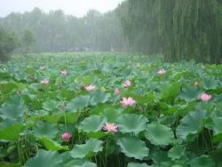 Du lịch miền sông nước khó quên bởi những địa điểm du lịch nổi tiếng tại Đồng Tháp