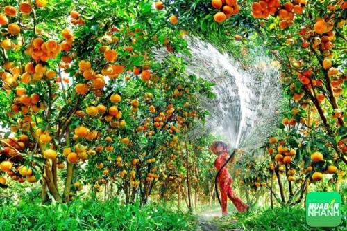 Trái cây miệt vườn Cần Thơ