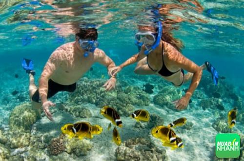 Lặn ngắm san hô đẹp, thú vị tại biển Cù Lao Chàm