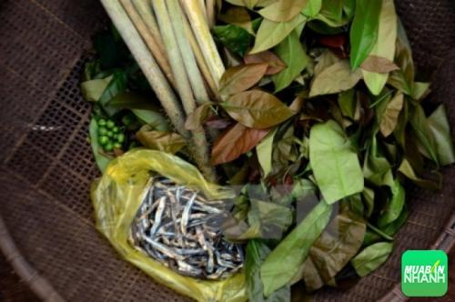 Cá, đọt mây, rau nhíp là những nguyên liệu chính tạo nên món canh thụt đặc biệt của người M'nông ở Đắk Nông