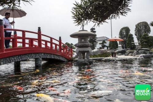 Vừa chụp hình, vừa ngắm đàn cá cảnh tuyệt đẹp tại Công viên đá Nhật – Rin Rin Park