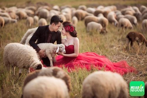 Địa điểm chụp ảnh cưới đẹp ngây ngất ở Ninh Thuận, 316, Phương Mai, Địa Điểm Nhanh, 21/10/2016 09:06:44