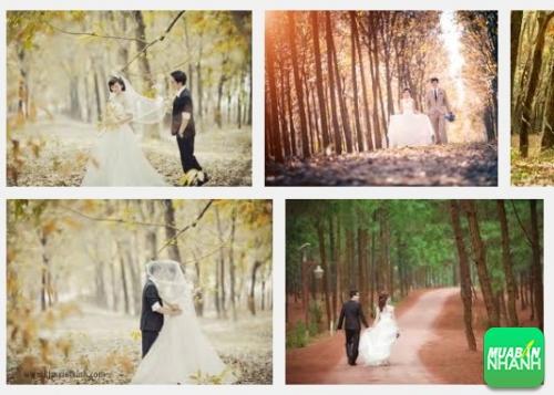Địa điểm chụp hình cưới đẹp ở Bình Phước, 321, Phương Mai, Địa Điểm Nhanh, 25/10/2016 10:22:26