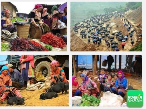 Chợ Cán Cầu - Chợ trâu nơi mua bán hấp dẫn của vùng cao Lào Cai, 362, Phương Mai, Địa Điểm Nhanh, 02/11/2016 11:30:35