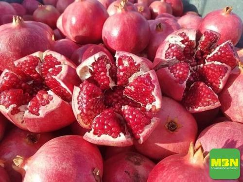Địa điểm bán cây giống lựu đỏ lùn Ấn Độ uy tín, chất lượng tại Hà Nội, 453, Mãnh Nhi, Địa Điểm Nhanh, 02/08/2018 16:27:16